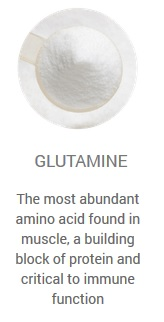 glutamine detailed information
