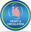 "Image showing ""Heart and Circulation"""