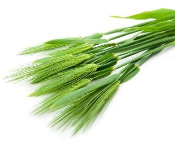 just greens barley grass